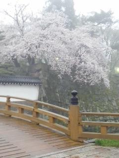 和歌山城のお堀
